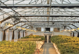 Grow Greenhouse environmental control
