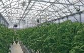 7 Spruce farm plants in greenhouse