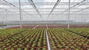 Retail and Nursery Greenhouse