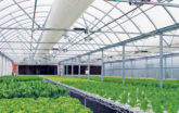 Greenhouse filled with hydroponics