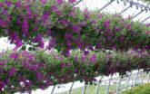 Floral cold frame