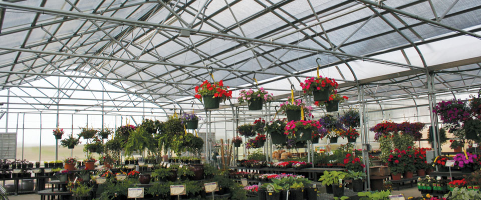 commercial greenhouse inside