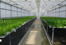 Vegetable hydroponics