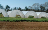 Multiple high tunnels