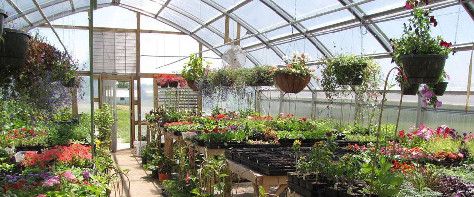 backyard flower greenhouse