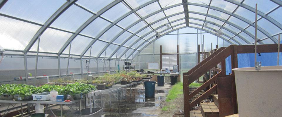 premium greenhouse inside