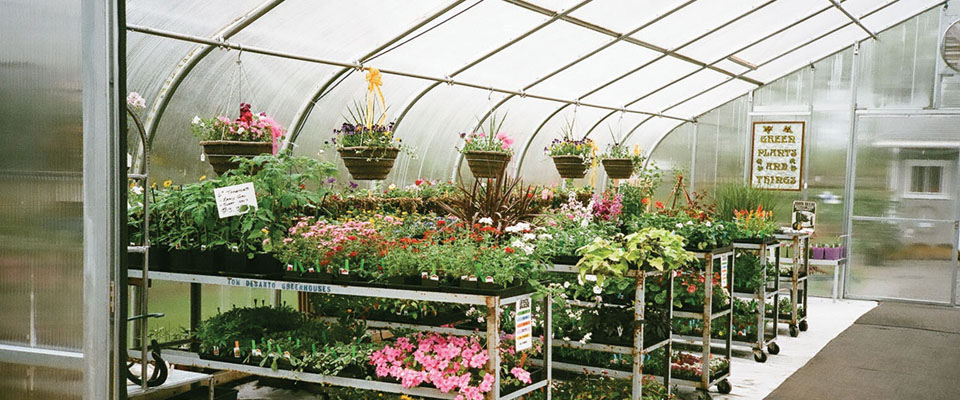 professional greenhouses