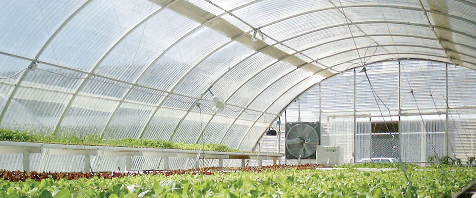 inside corrugated polycarbonate greenhouse