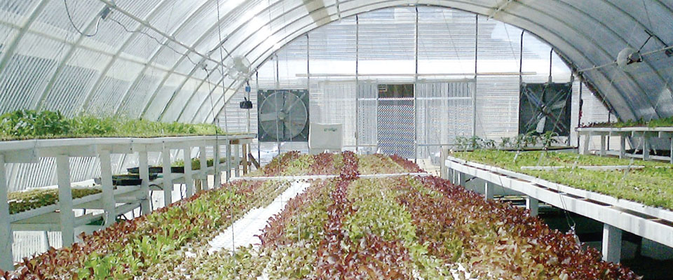 corrugated polycarbonate greenhouse kits