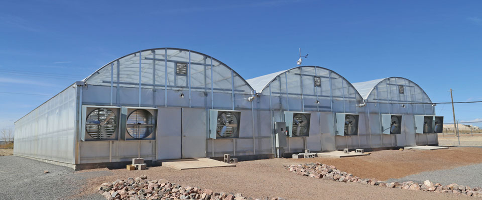Marijuana greenhouse