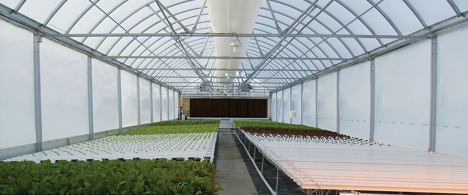 hydroponic industrial greenhouse