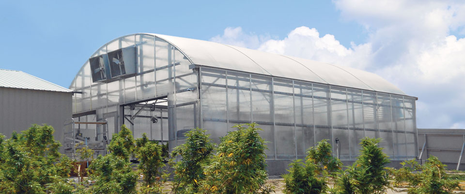 marijuana greenhouse doors