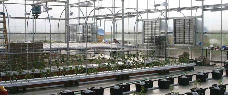 inside polycarbonate greenhouse