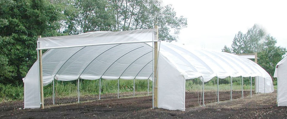 hoop house growing