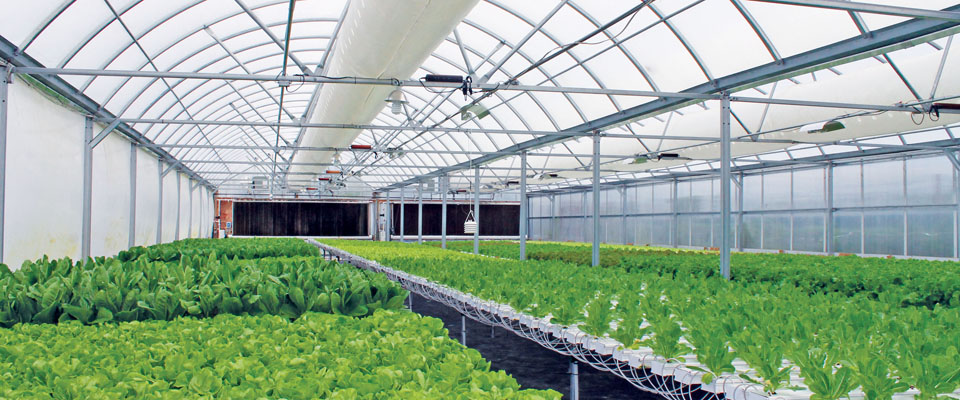 hydroponic vegetable greenhouse