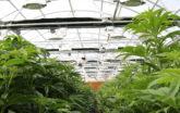 Low shot of grow greenhouse