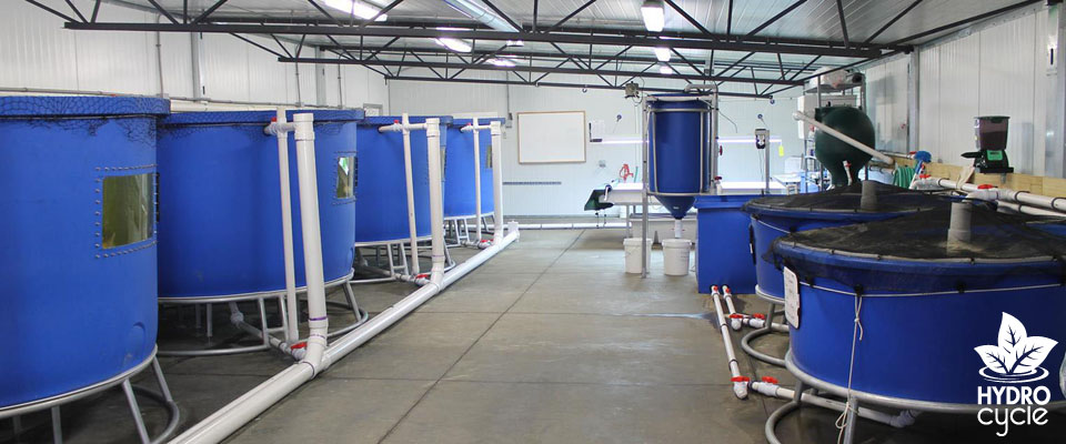 Commercial aquaponics systems