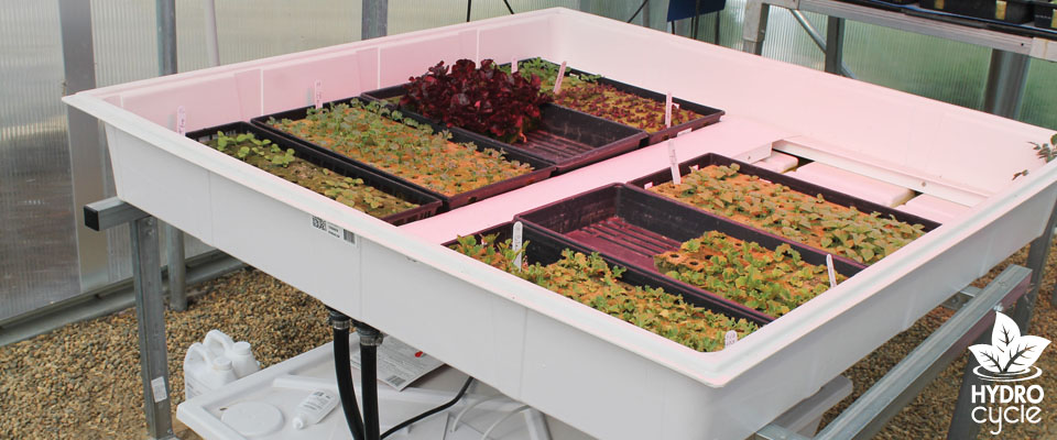 ebb and flow hydroponics