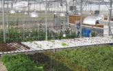 Custom hydroponics systems