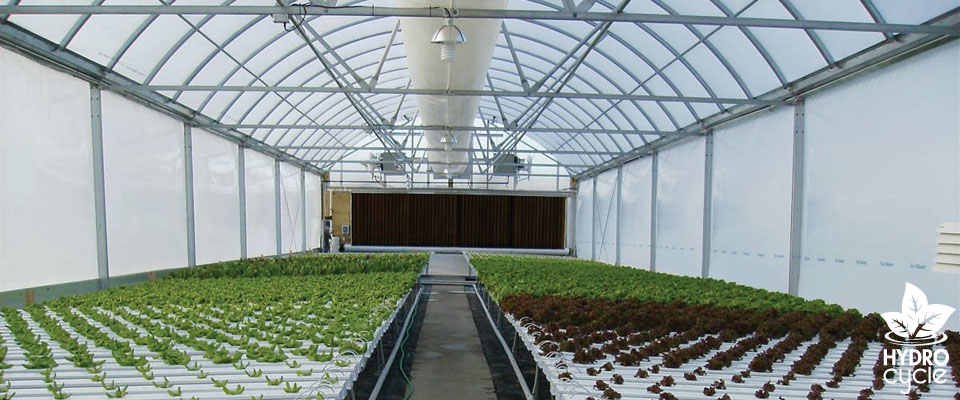 Hydrocycle NFT Hydroponic Systems