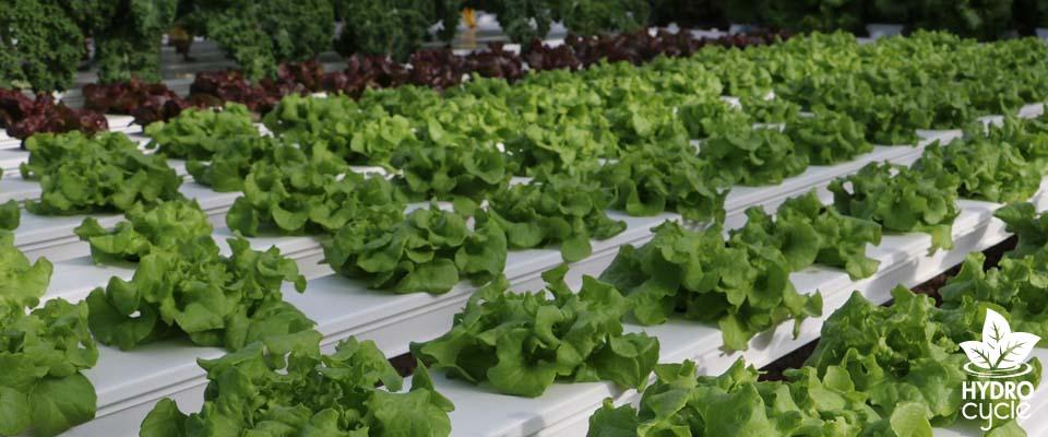 hobby hydroponics system