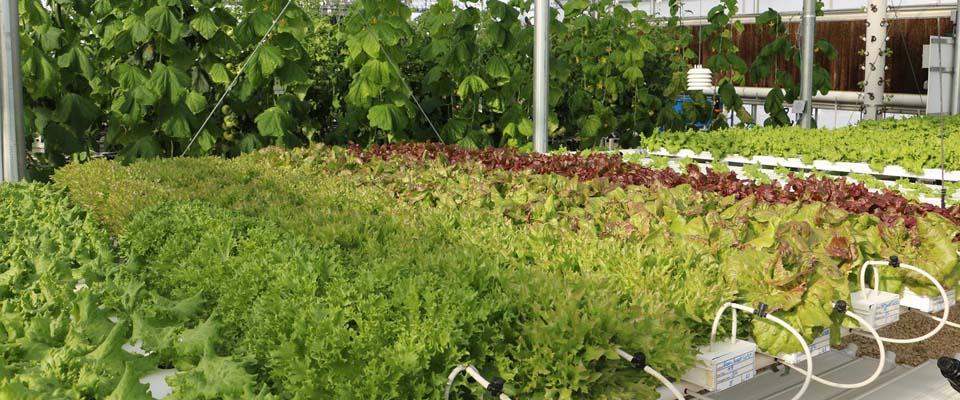 professional hydroponics system