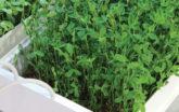 Microgreen system