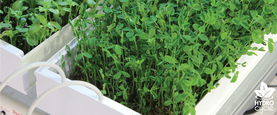hydroponic microgreen systems