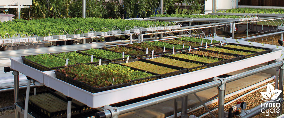 microgreen tables