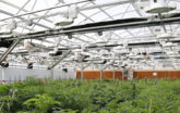Grow Greenhouse consulting