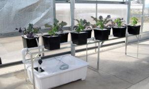 995-blog-hydroponic