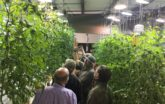 CEA lesson in hydroponic Greenhouse