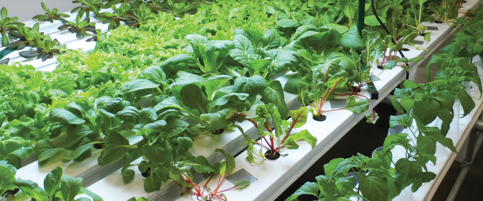 Charles Drew horticulture hydroponics