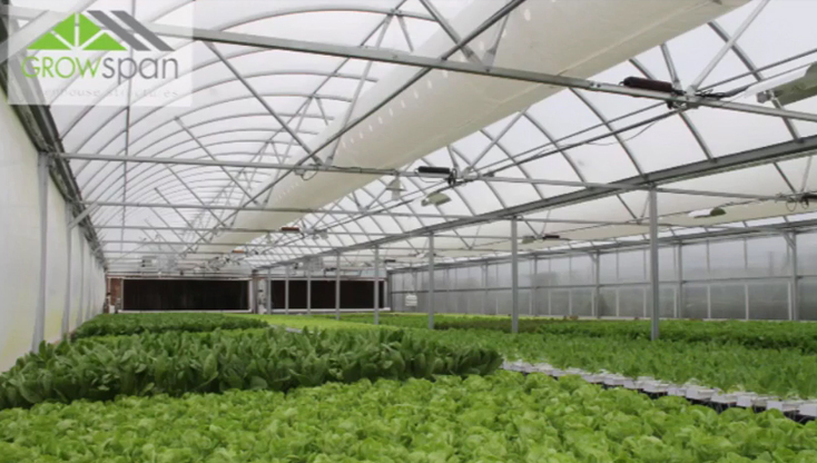 Gutter-Connected Series 1000 Commercial Greenhouse