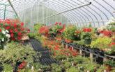 Hendons Garden Center interior