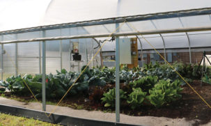 greenhouse curtain