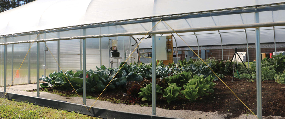greenhouse curtain