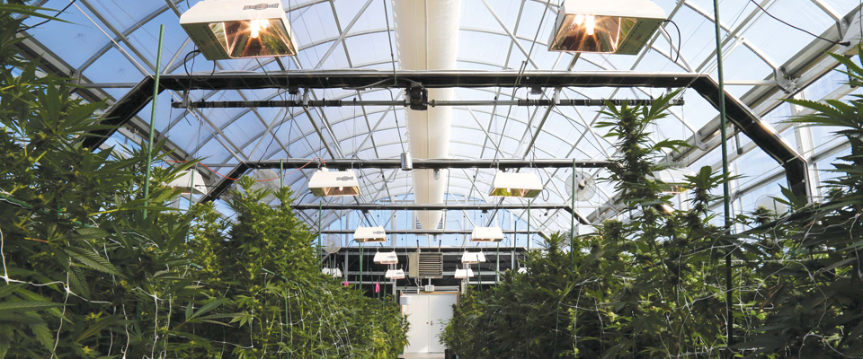Greenhouse installation service, greenhouse installation cost.