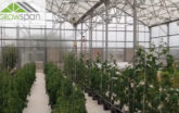 Breckenridge Hydroponic Greenhouse with tall plants