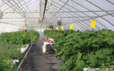 GrowSpan Vegetable Greenhouse