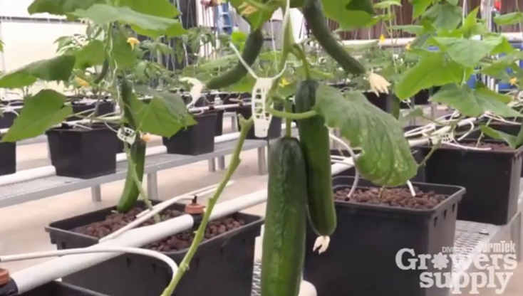 GrowSpan's Greenhouse Tips - Purging Hydroponics Systems Part 1