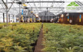 Pueblo Colorado Grow Greenhouse