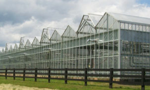 Cabrio Venlo Greenhouses