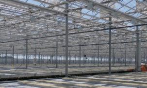 WideSpan Venlo Greenhouses