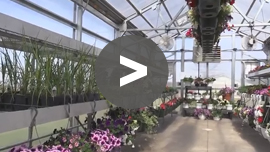 Nursery Greenhouses