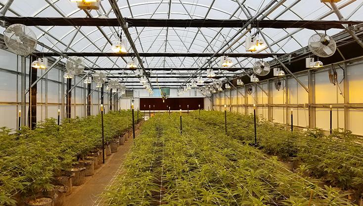 Cannabis Environmental Control - Mother Earth Farms