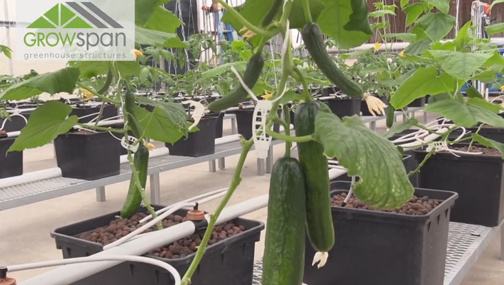 GrowSpan's Greenhouse Tips - Propagation Part 2