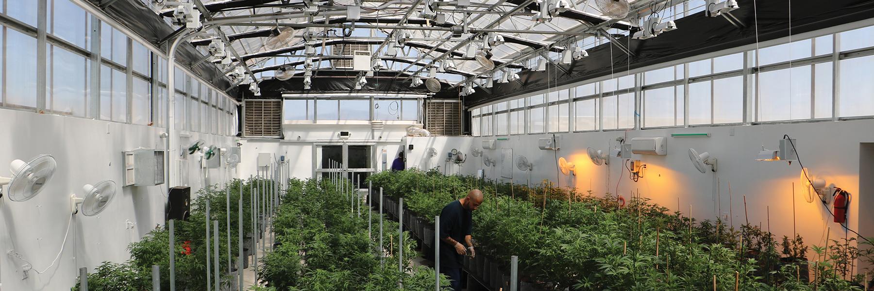 AZ turnkey development Greenhouse
