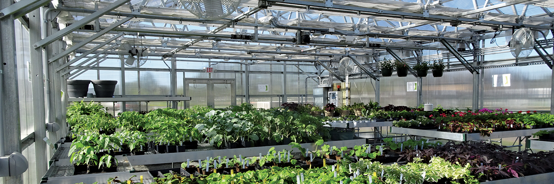 Chippewa valley Greenhouse