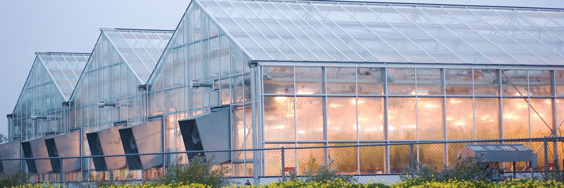 buy commercial cannabis greenhouse